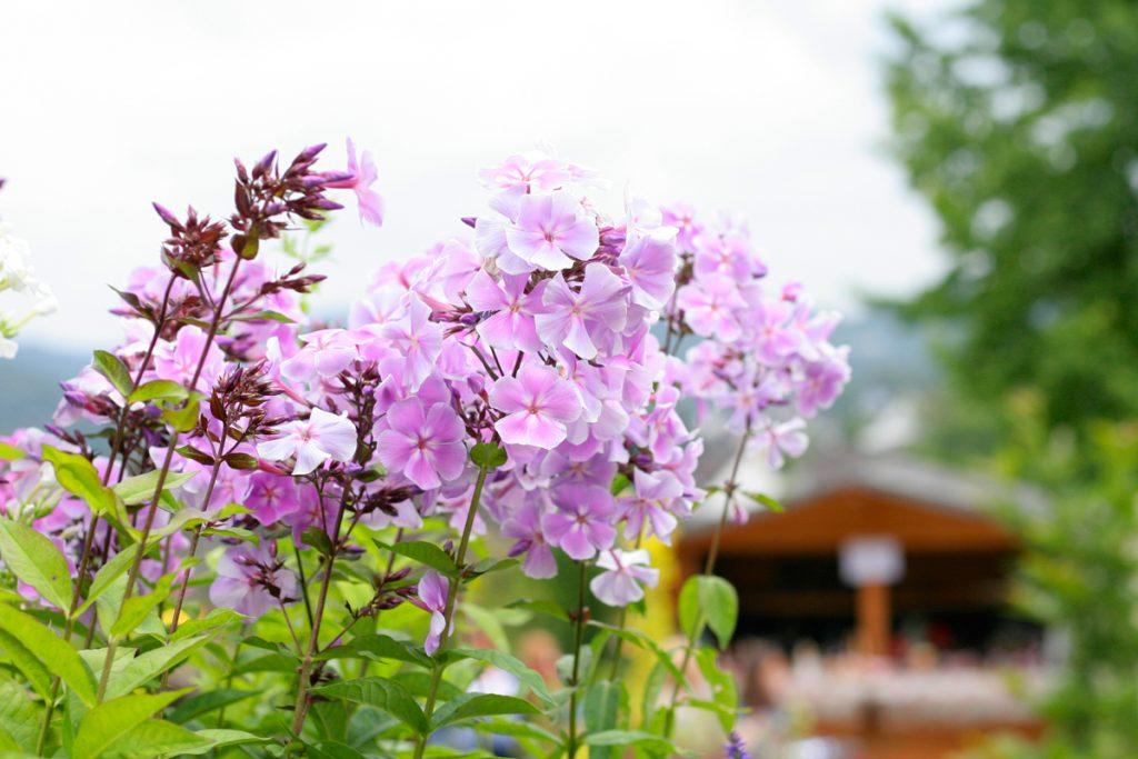 Blattwerk Oberberg im Sommer